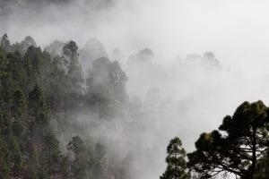 fog-571786_1920 2